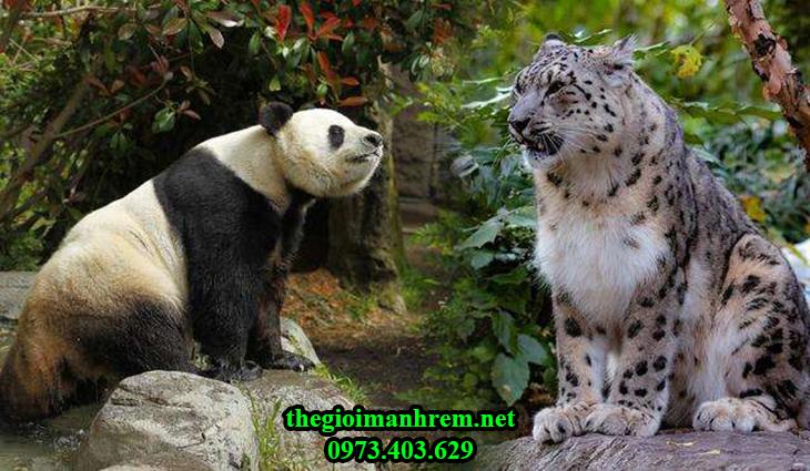 panda-and-leopard